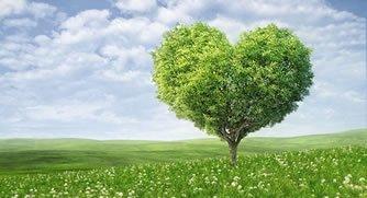 Ambiente, verde e rifiuti